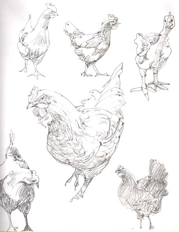 Sketches of Hens in Pencil by artist Eddie Flotte