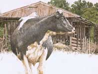 Painting by Eddie Flotte: Cow Solo