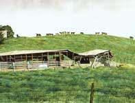 Painting by Eddie Flotte: On the Mooove