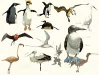 Painting by Eddie Flotte: Sketches of Birds