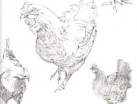 Painting by Eddie Flotte: Sketches of Hens in Pencil