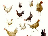 Painting by Eddie Flotte: Sketches of Many Chickens