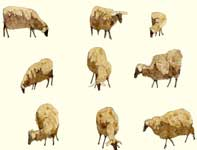 Painting by Eddie Flotte: Sketches of Sheep
