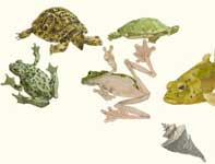 Painting by Eddie Flotte: Sketches of Turtles and Frogs